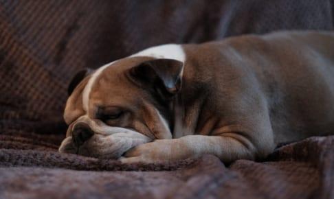 犬の鼻炎を徹底解説!犬の病気を正しく知ろう