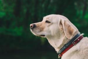 犬のレプトスピラ症を徹底解説!犬の病気を正しく知ろう