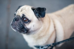 犬のコクシジウム症を徹底解説!犬の病気を正しく知ろう