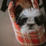 犬のツメダニ症を徹底解説!犬の病気を正しく知ろう