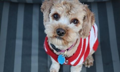 犬の水頭症を徹底解説!犬の病気を正しく知ろう