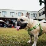 犬の疥癬(ヒゼンダニ症)を徹底解説!犬の病気を正しく知ろう