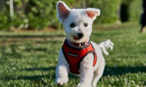 犬のリンパ腫を徹底解説!犬の病気を正しく知ろう