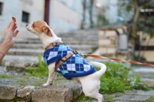 犬のニキビダニ症(毛包虫症)を徹底解説!犬の病気を正しく知ろう
