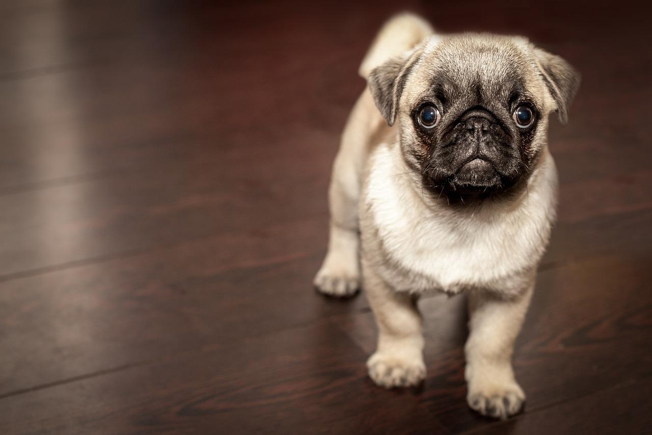 犬の尿路結石症を徹底解説!犬の病気を正しく知ろう