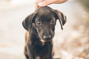 犬の結膜炎を徹底解説!犬の病気を正しく知ろう