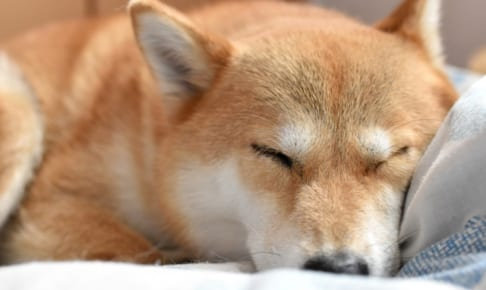 犬の眼瞼外反症を徹底解説!犬の病気を正しく知ろう