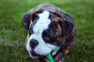 犬の水腎症を徹底解説!犬の病気を正しく知ろう