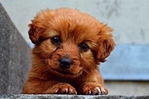 犬の鞭虫症を徹底解説!犬の病気を正しく知ろう