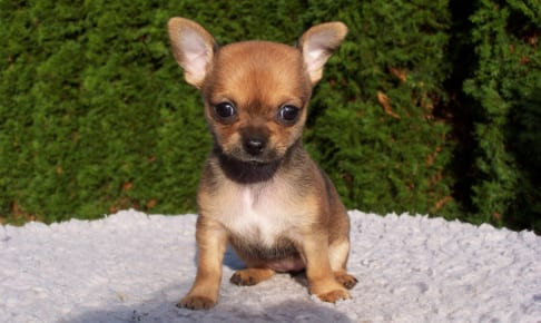 犬の咽頭炎を徹底解説!犬の病気を正しく知ろう