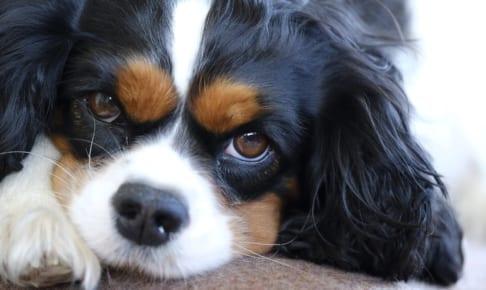 犬の甲状腺機能亢進症を徹底解説!犬の病気を正しく知ろう