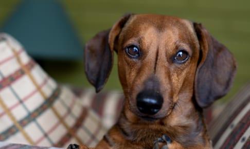 犬の進行性網膜萎縮を徹底解説!犬の病気を正しく知ろう