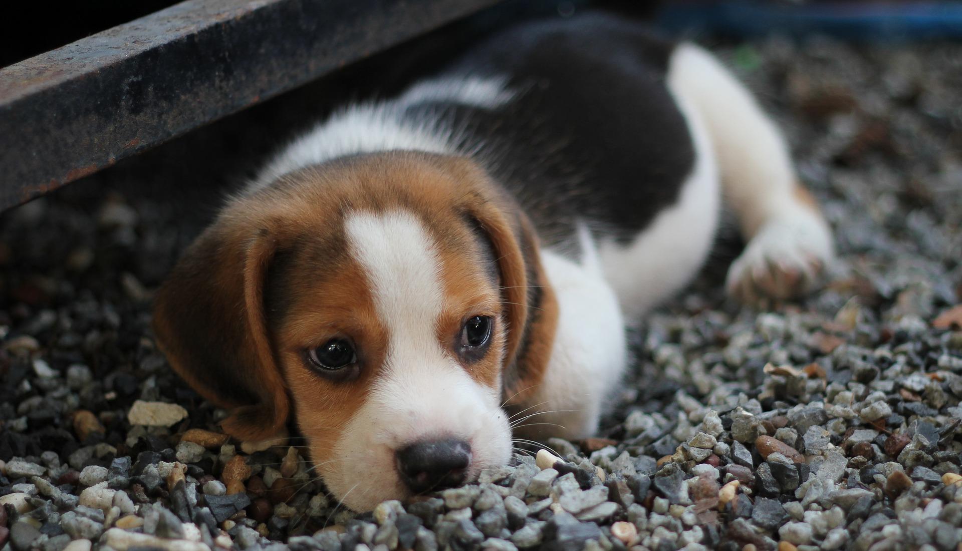 犬の皮膚真菌症を徹底解説!犬の病気を正しく知ろう