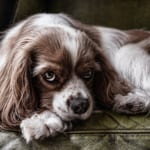 犬の膵外分泌不全症候群を徹底解剖!犬の病気を正しく知ろう