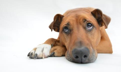 犬の腸炎(慢性腸炎)を徹底解説!犬の病気を正しく知ろう