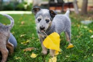 犬の前立腺腫瘍を徹底解説!犬の病気を正しく知ろう