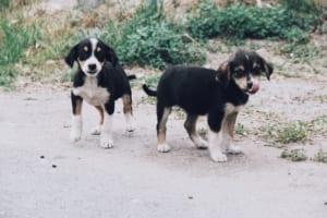 犬の包皮炎を徹底解説!犬の病気を正しく知ろう