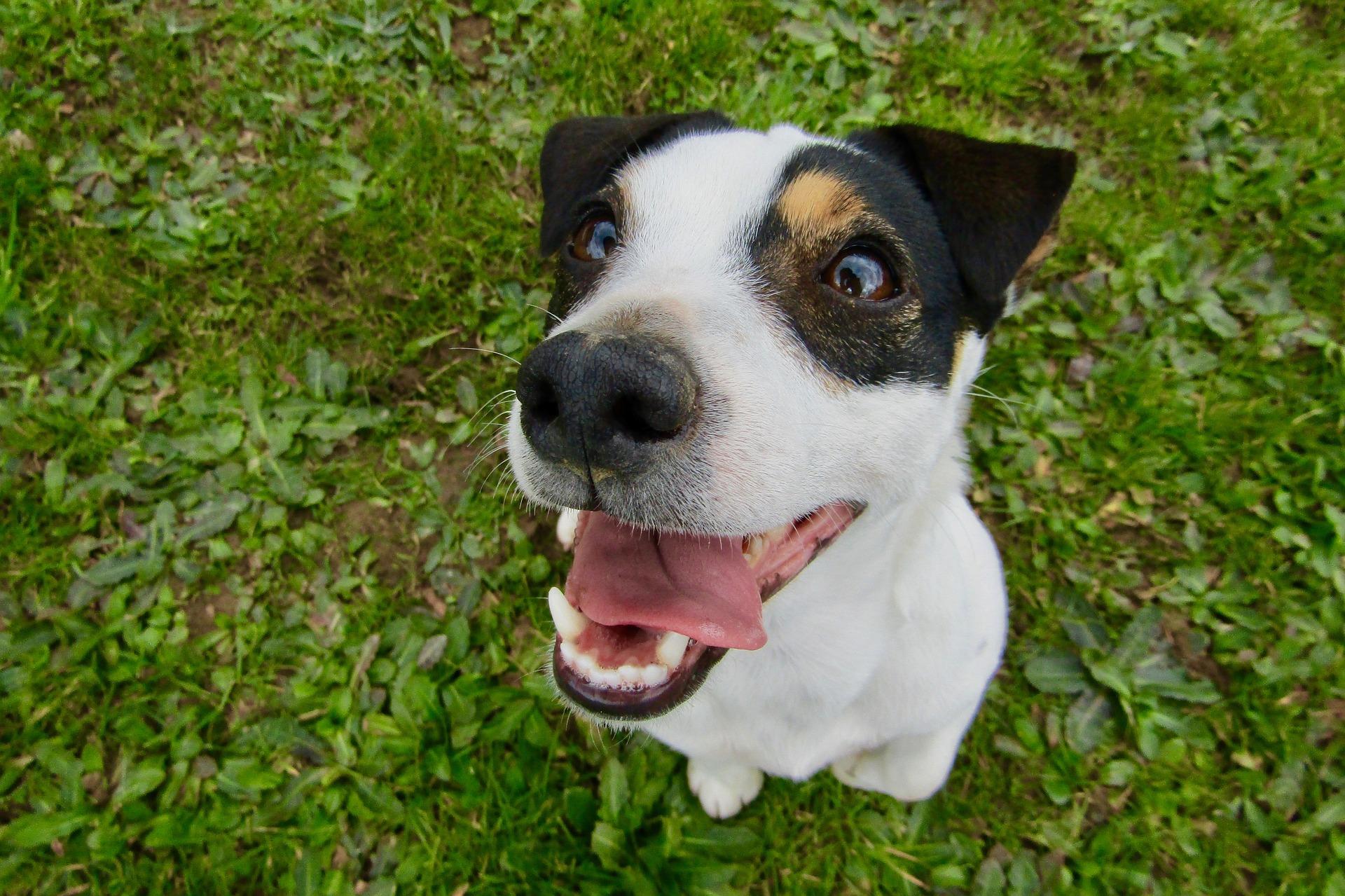 犬のエナメル質形成不全を徹底解説!犬の病気を正しく知ろう