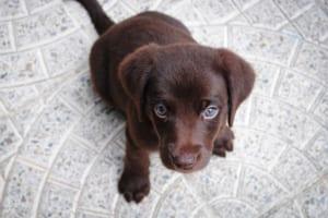 犬の前立腺炎を徹底解説!犬の病気を正しく知ろう