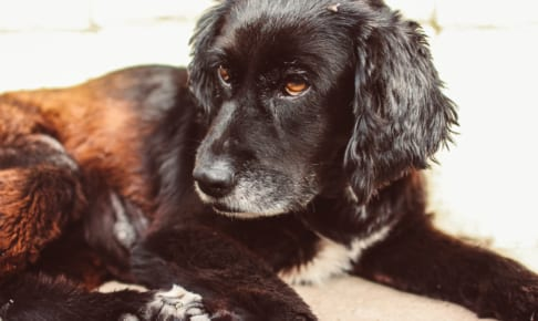 犬のマダニ症を徹底解説!犬の病気を正しく知ろう