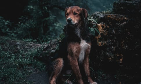 犬の喉頭麻痺を徹底解説!犬の病気を正しく知ろう