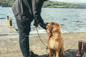 犬の条虫症を徹底解説!犬の病気を正しく知ろう