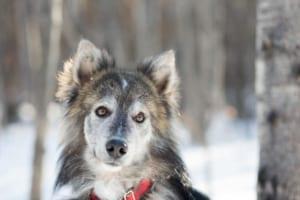 犬の腎盂腎炎を徹底解説!犬の病気を正しく知ろう