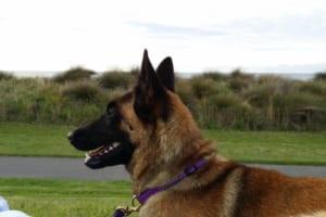 犬の軟口蓋過長症を徹底解説!犬の病気を正しく知ろう