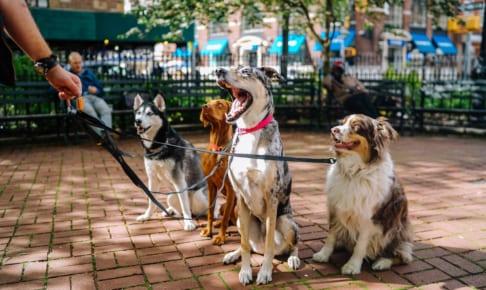 犬の鼻腔狭窄症を徹底解説!犬の病気を正しく知ろう