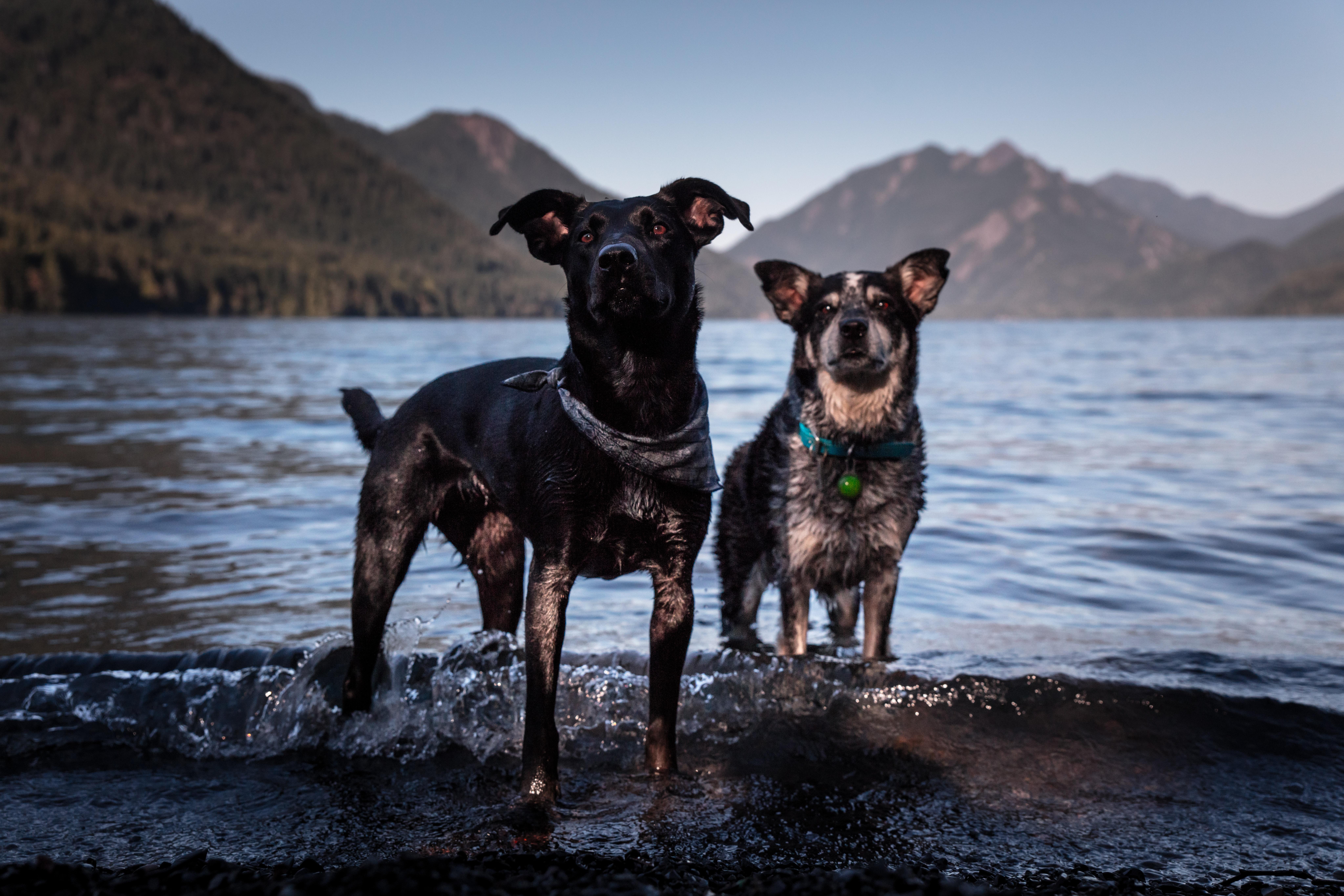 犬の脂肪腫を徹底解説!犬の病気を正しく知ろう