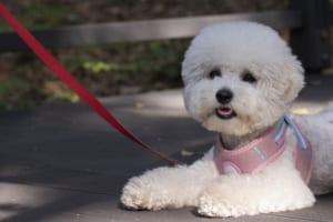 犬の横隔膜ヘルニアを徹底解説!犬の病気を正しく知ろう