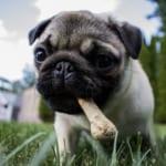 犬の低たんぱく血症を徹底解説!犬の病気を正しく知ろう