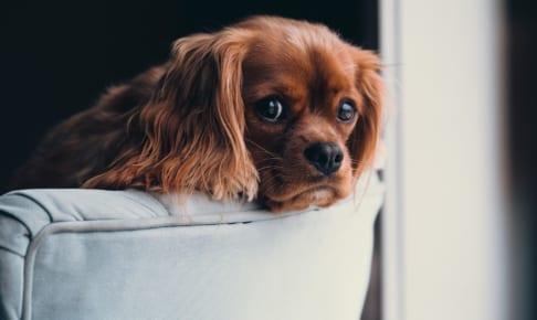 犬の動脈管開存症を徹底解説!犬の病気を正しく知ろう