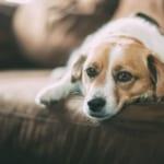 犬のネフローゼ症候群を徹底解説!犬の病気を正しく知ろう