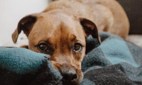 犬の狂犬病を徹底解説!犬の病気を正しく知ろう
