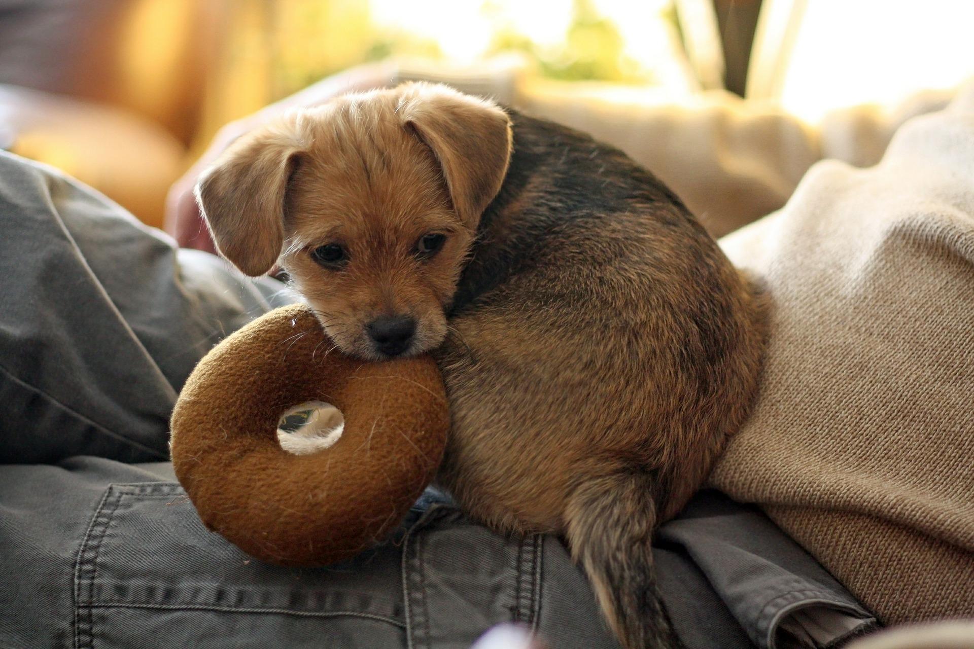 犬の尿道炎を徹底解説!犬の病気を正しく知ろう