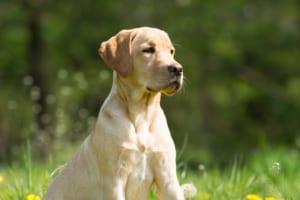 犬の胃潰瘍を徹底解説!犬の病気を正しく知ろう