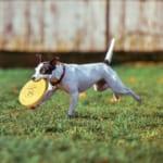 犬の接触性アレルギーを徹底解説!犬の病気を正しく知ろう