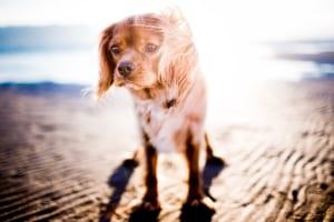 犬の関節リウマチ(リウマチ様関節炎)を徹底解説!犬の病気を正しく知ろう