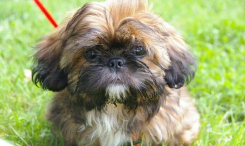 犬の網膜剥離を徹底解説!犬の病気を正しく知ろう