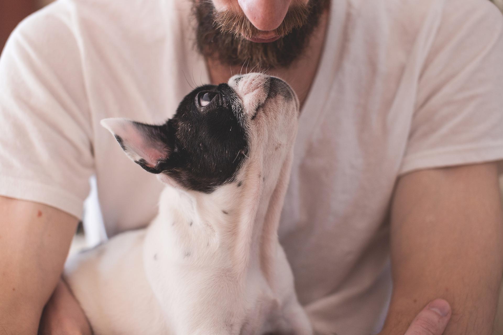 犬の巨大食道症(食道拡張症)を徹底解説!犬の病気を正しく知ろう