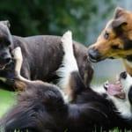 犬の肛門周囲腺炎を徹底解説!犬の病気を正しく知ろう