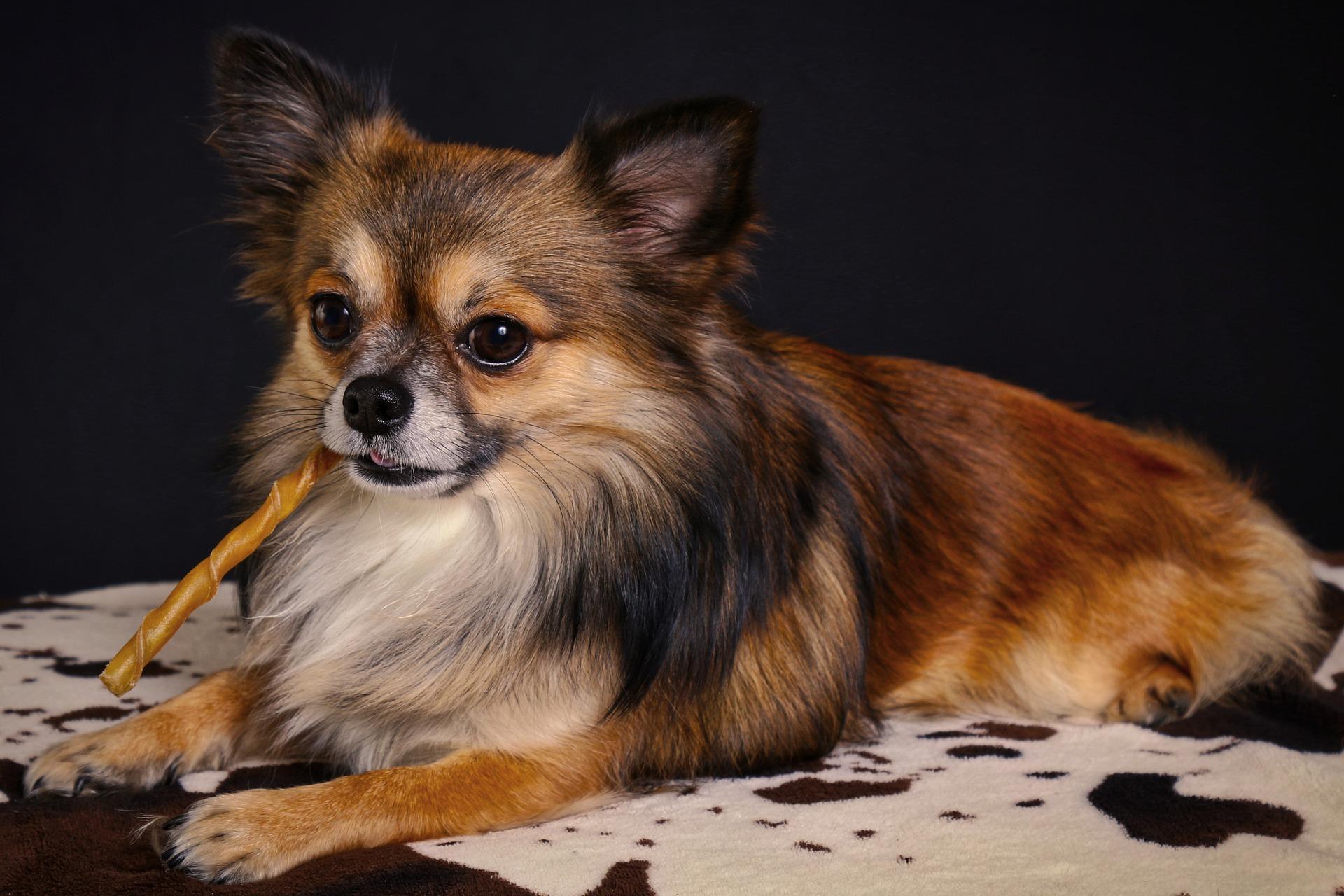 犬の蛋白漏出性胃腸炎を徹底解説!犬の病気を正しく知ろう