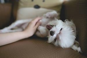 犬の乳がんを徹底解説!犬の病気を正しく知ろう
