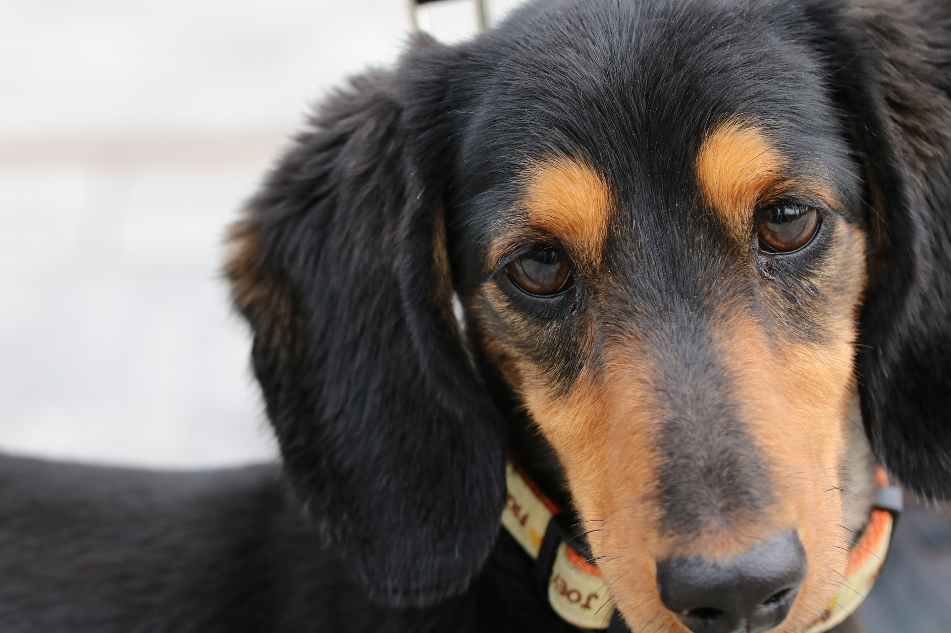 犬の口腔腫瘍を徹底解説!犬の病気を正しく知ろう