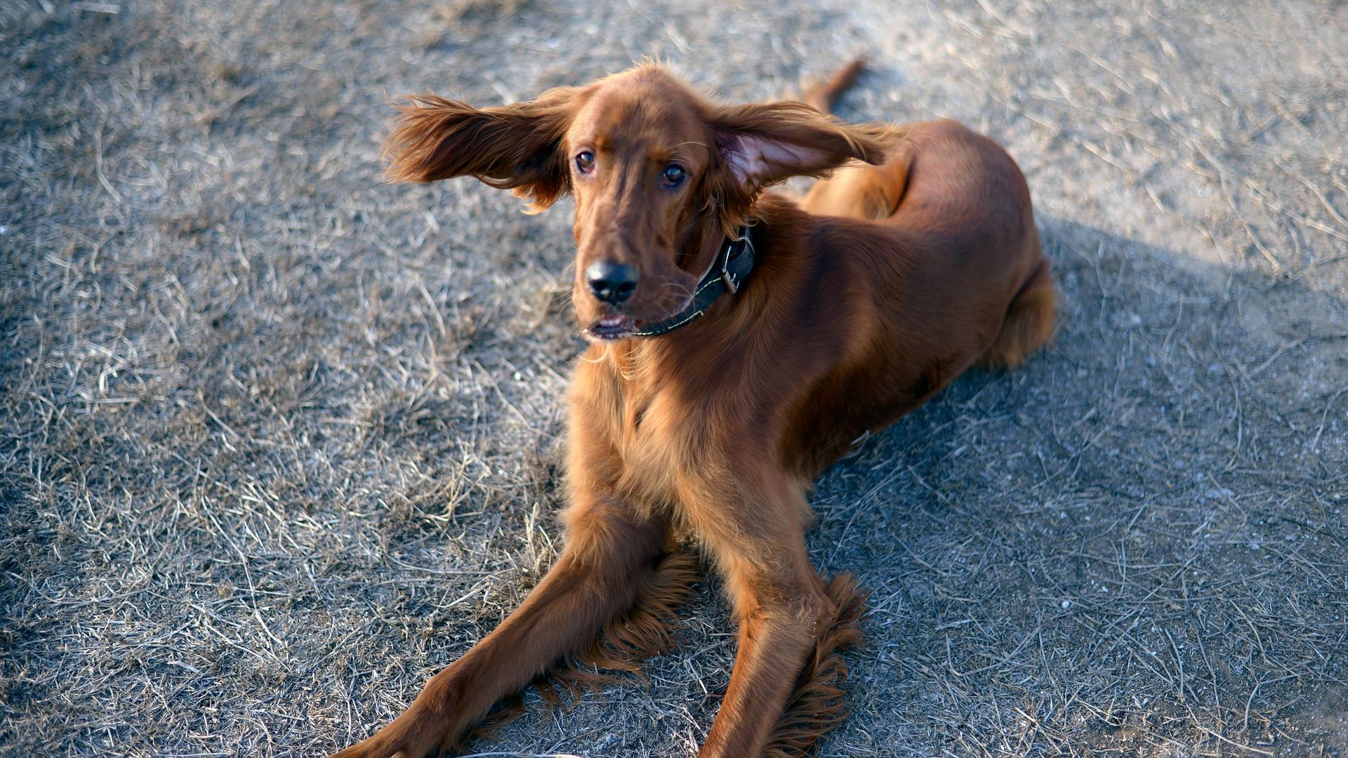 犬の網膜萎縮を徹底解説!犬の病気を正しく知ろう