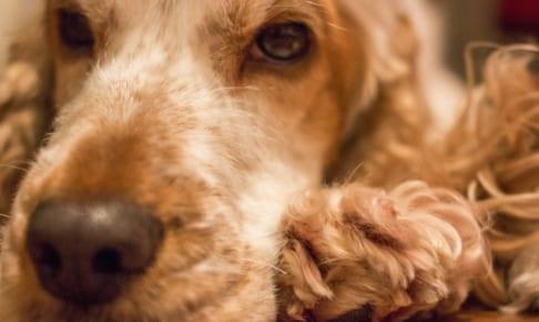 犬の肥満症を徹底解説!犬の病気を正しく知ろう