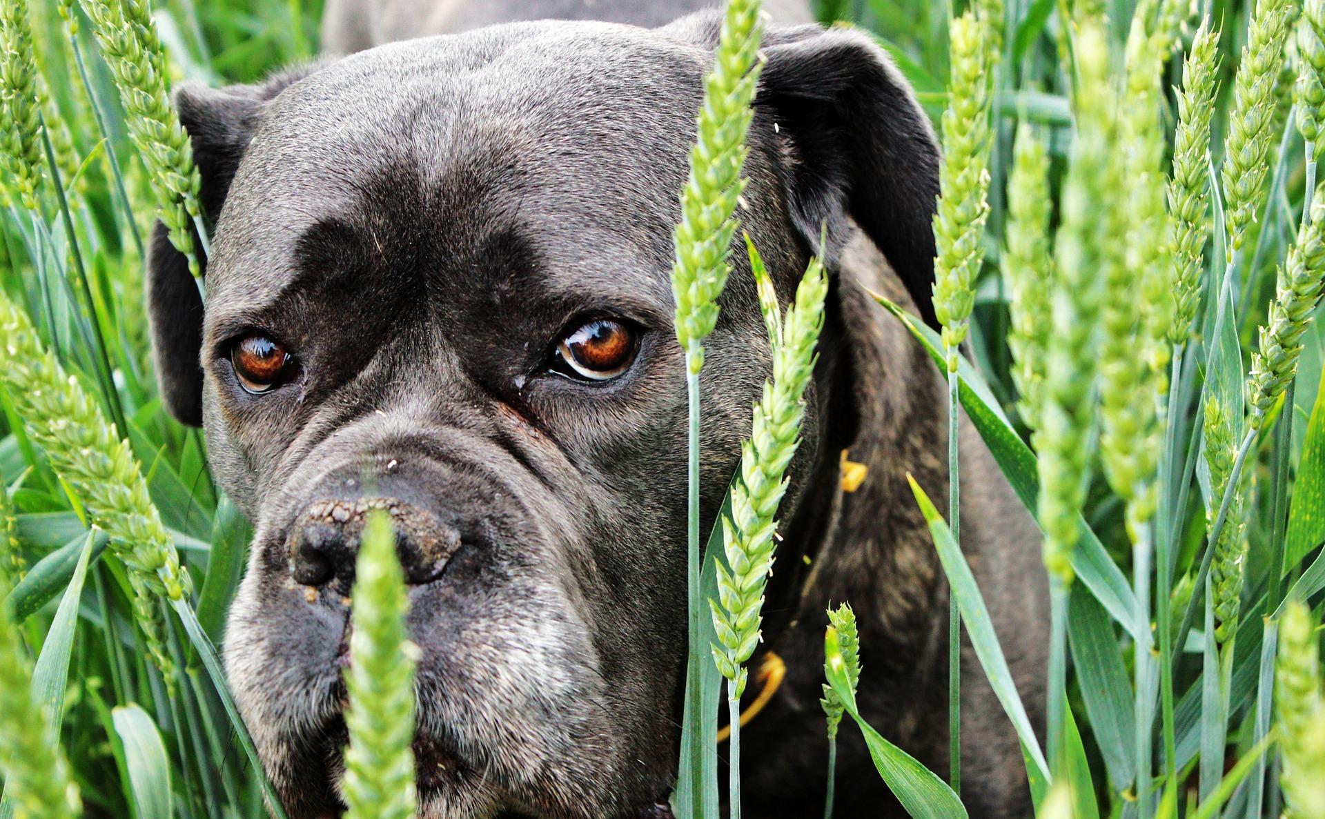 犬の精巣腫瘍を徹底解説!犬の病気を正しく知ろう
