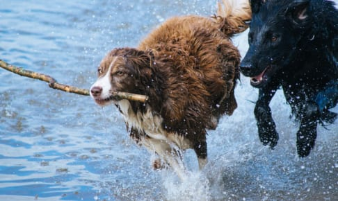 犬の捻挫を徹底解説!犬の病気を正しく知ろう