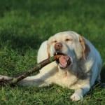 犬の腸重積を徹底解説!犬の病気を正しく知ろう